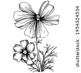 cosmos flower by hand drawing.... | Shutterstock .eps vector #1954324534
