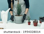 The Girl Plants Indoor Plants...