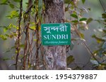 Sundarbans Heritiera Fomes Tree ...