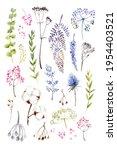 flowers grass watercolor...   Shutterstock . vector #1954403521