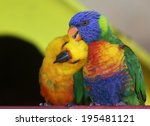 pair of two colorful parrots | Shutterstock . vector #195481121