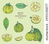 collection of garcinia cambogia ... | Shutterstock .eps vector #1955150077