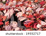 Fallen Leaves Covering Storm...