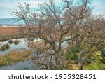 Nature Scene In Floodplain...