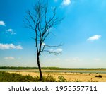 Tree In The Field. The...