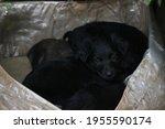 Black Puppys  Street Cute Pups  ...