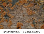 texture of natural stone  rough ... | Shutterstock . vector #1955668297