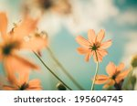 yellow cosmos flower and blue... | Shutterstock . vector #195604745