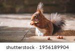 A Cute Squirrel Eating Nuts...
