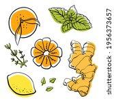 ginger  lemon  mandarin  thyme... | Shutterstock .eps vector #1956373657