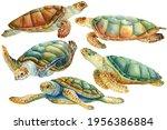 Set Of Sea Turtle On An...