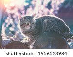 Portrait Of A Cat Outdoors In...