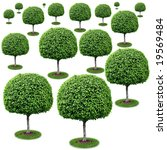 Field Of Trees   Ficus...