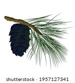 cedar branch with a cone vector ... | Shutterstock .eps vector #1957127341