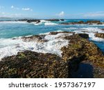 Mediterranean Mussel  Mytilus...
