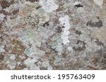 Various Colors Of Lichen On...