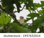 Dove Bird Sitting On A Lamp...