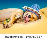 Stock photo drunk chihuahua dog having a siesta with crazy and funny silly face 195767867