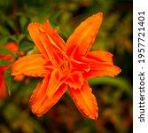 Large Red Orange Flower Of Many ...