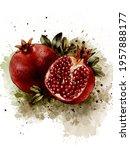 Pomegranate Art Print  Fruit...