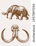 graphical set of  mammoth ... | Shutterstock .eps vector #1957897054