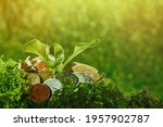 A Small Plant Grows Among The...