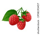 Branch Of Red Raspberry With...