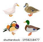 Vector Set Of Ducks Isolated On ...