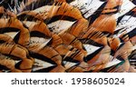 Colored Pheasant Feathers With...