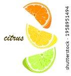 orange  lemon  lime  grapefruit.... | Shutterstock .eps vector #1958951494
