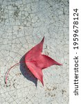 Red Maple Leaf On Cement Floor