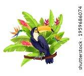 toucan vector illustration ...   Shutterstock .eps vector #1959686074