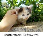 small white kitten with speckles | Shutterstock . vector #195969791