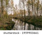 Autumn Landscape With A Bog...