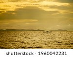 The Golden Silhouette Of...