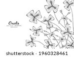 oxalis flower and leaf hand... | Shutterstock .eps vector #1960328461