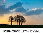 Group Of 4 Bare Trees Above...