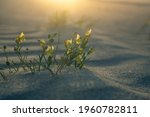 A Group Of Blooming Gallwort In ...