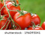 Lovely Fresh Small Red Tomatoes ...
