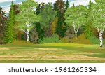 Mixed Forest With Spruce  Birch ...