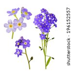 set of forget me not flowers... | Shutterstock . vector #196152557