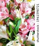 delicate light flowers...   Shutterstock . vector #1961598721