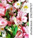 delicate light flowers...   Shutterstock . vector #1961598727