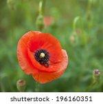 flower of poppy on a green... | Shutterstock . vector #196160351