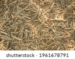 Dry Bamboo Leaves On Ground For ...