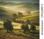 tuscan olive trees and fields... | Shutterstock . vector #196168871