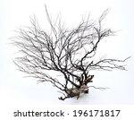 many dry twigs in rocks 0013   Shutterstock . vector #196171817