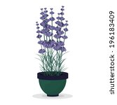 lavender in a green pot... | Shutterstock .eps vector #196183409