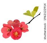 peach  pear  apple flower... | Shutterstock .eps vector #1962122914