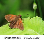 brown beauty | Shutterstock . vector #196223609